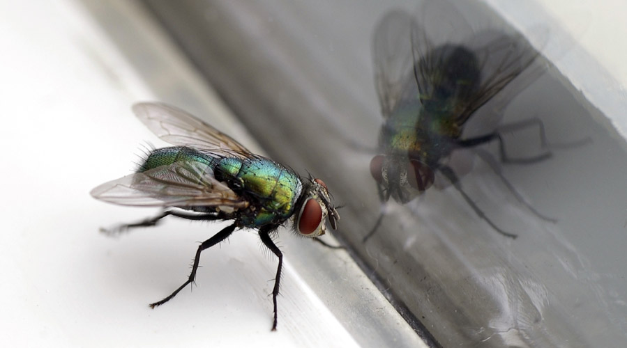 A fly infront of a window